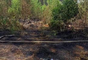 Леса Калужской области трижды горели на выходных