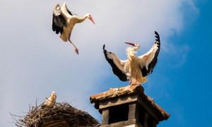 В Калуге пройдет патриотическая акция «Аист на крыше»