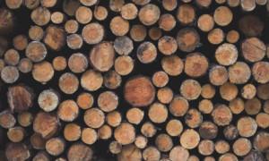 Мужчина из Козельского района прогорел на покупке лесовоза