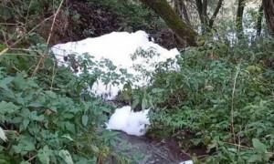 В Протве на территории Калужской области обнаружили мыльную пену